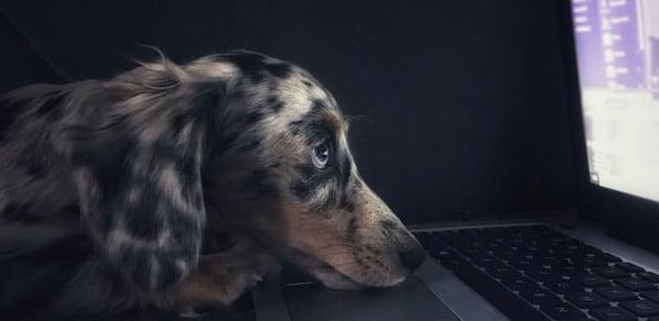 virtual-dog-training