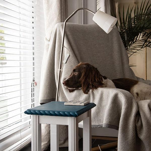 sad-dog-by-window
